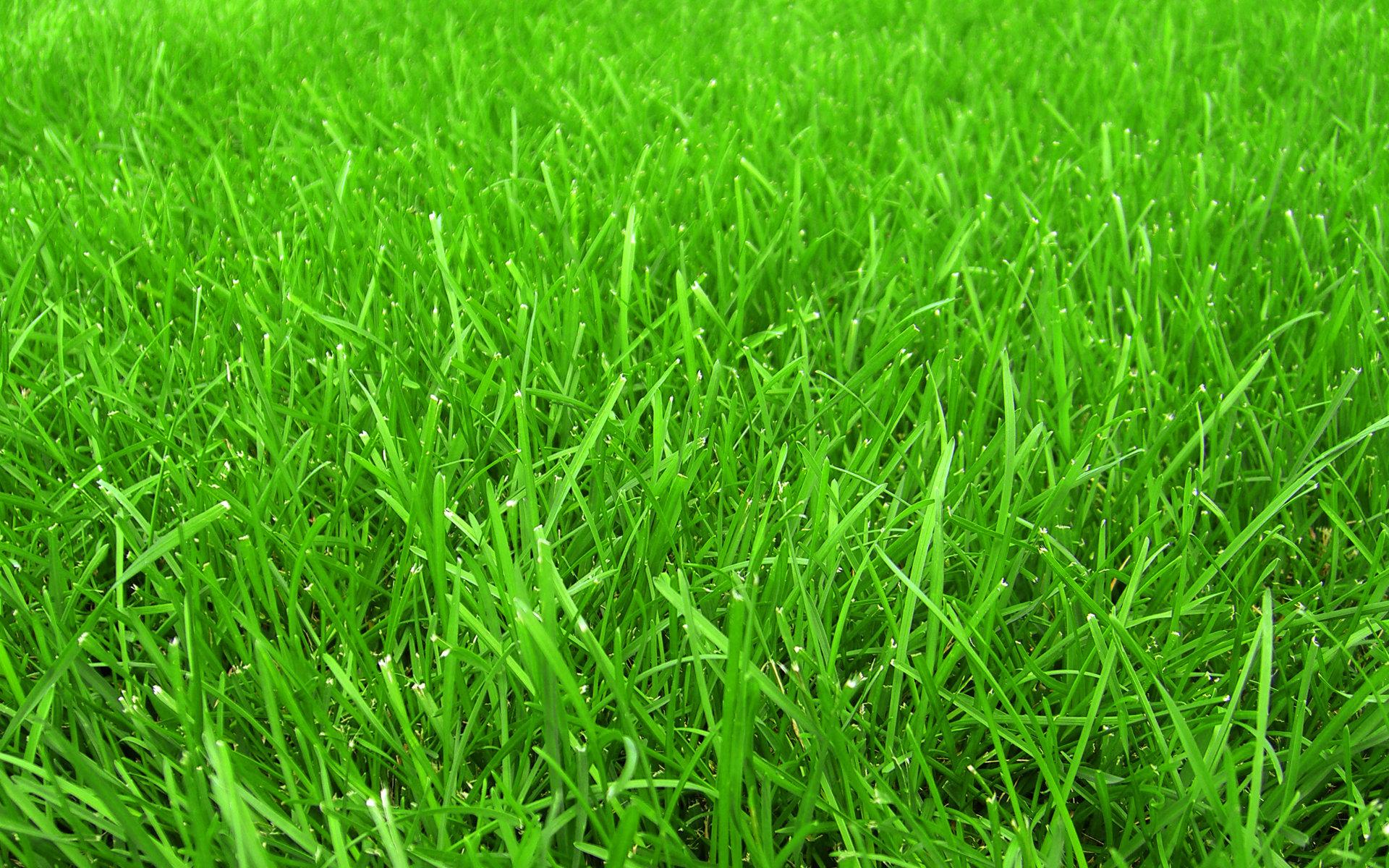 Системы питания газона. Часть 2.