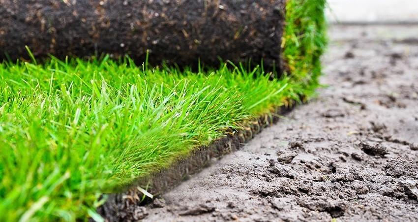 Посев или рулонный газон? Подготовка почвы под газон